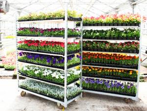 Перевозка растений