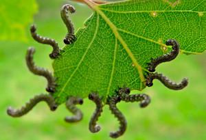 Появление вредителей растений