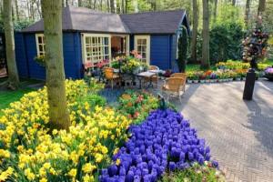Первоцветы в ландшафтном дизайне