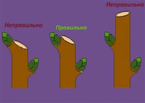 Примеры обрезки