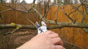 Для чего необходима обрезка деревьев?