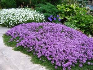 Почвопокровные растения:5 причин создать зеленый ковер в своем саду