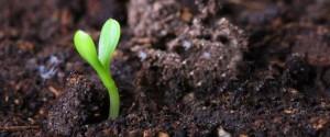 Почвенная среда для растений