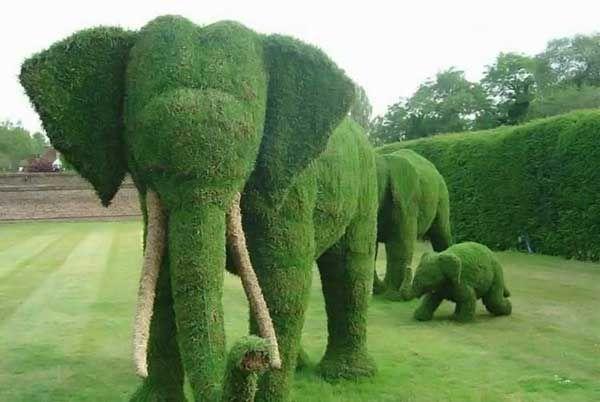 Топиарное искусство в ландшафтном дизайне
