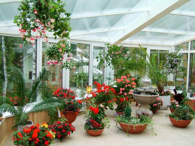 Цветочные растения в зимнем саду