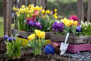 Последние дни для высадки луковичных первоцветов