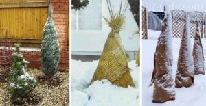 Защита растений в ландшафтном дизайне зимой
