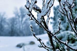 Как заморозки могут нанести вред ландшафтному дизайну?
