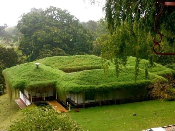 Зеленые крыши для загородного дома