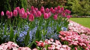 Луковичные первоцветы
