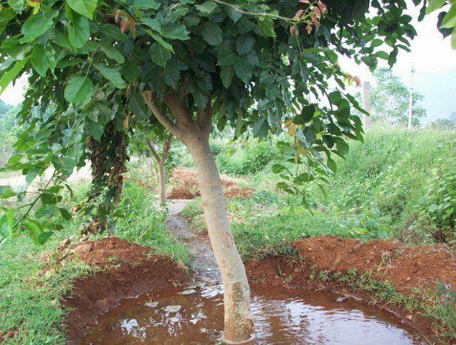 Режим полива растений во второй половине лета