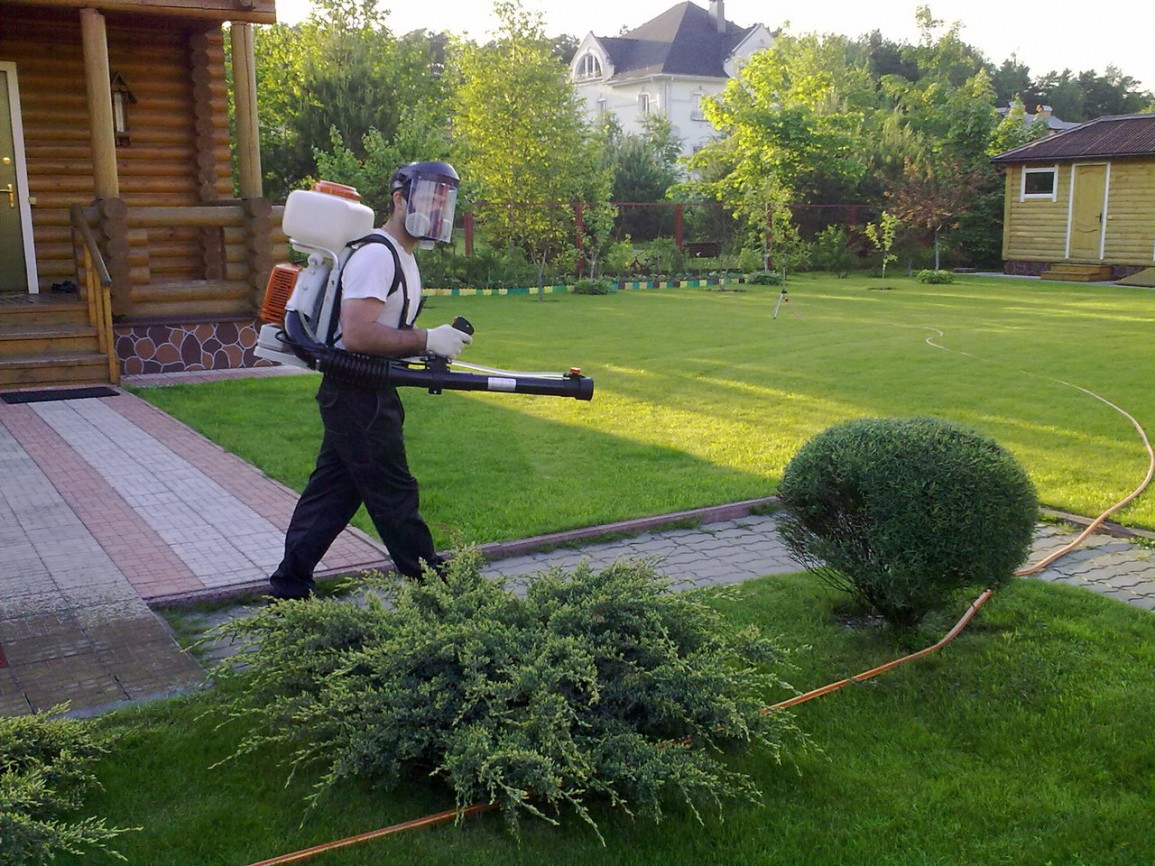 Выбор мер борьбы с насекомыми-вредителями ландшафтного дизайна