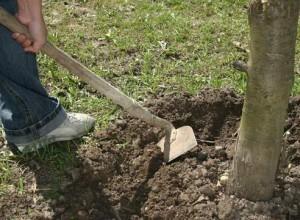 Агротехнические меры борьбы с вредителями ландшафтного дизайна