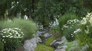 Ромашка белая в ландшафтном дизайне