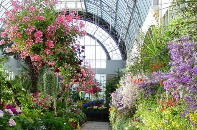 Способы высадки растений в зимнем саду